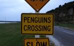 Pinguinjacht – dag 36